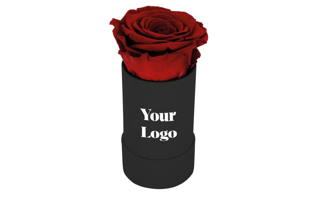 Dárková stabilizovaná růže