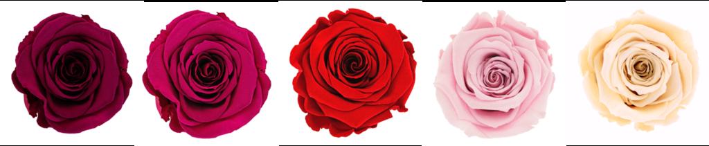 Pravé konzervované růže s možností personalizace